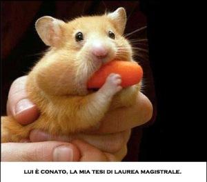 avatars-hamster-598063
